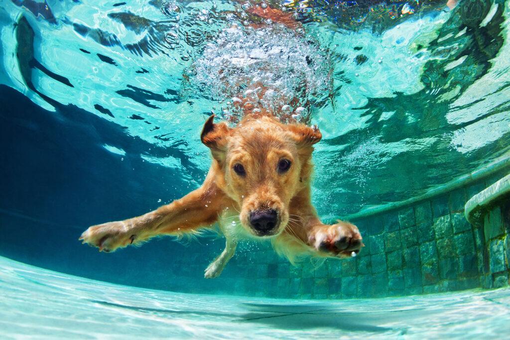 fun dog playing in pool